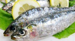 Enquête sur la pêche durable : la grande distribution… reste en rade